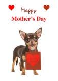 祝愿卡片与奇瓦瓦狗的愉快的母亲` s天尾随对负prese 免版税图库摄影