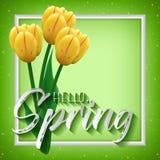 祝贺的卡片与春天初期  皇族释放例证
