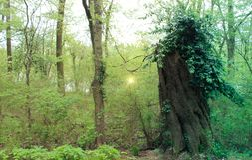 神仙在森林 免版税库存图片