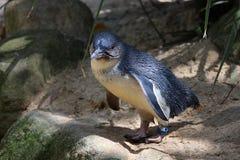 神仙的企鹅 库存图片