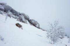 神仙的冬天森林在Zyuratkul国立公园 库存图片