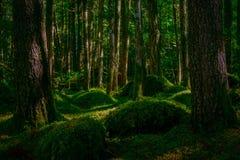 神仙的土地-青苔盖了森林 免版税图库摄影