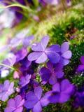 神仙的庭院 库存图片