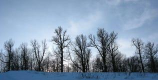 神仙的森林传说 图库摄影