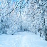 神仙的森林冬天 库存图片