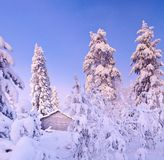 神仙的森林杉木雪结构树冬天 库存图片