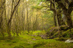 神仙的森林
