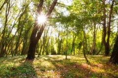 神仙的森林 库存照片