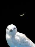 神仙的燕鸥 库存图片