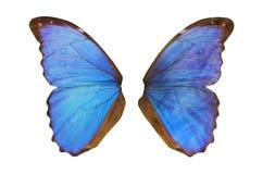 神仙的翼 库存照片
