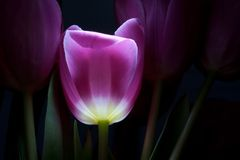 神仙的花传说 免版税库存图片