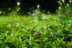 神仙的草甸 库存照片