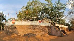 神圣的佛教玛哈Bodhi树,斯里兰卡 免版税库存照片