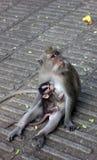 神圣的猴子森林圣所 库存图片