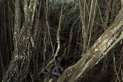 神圣的猴子森林圣所的热带密林, Ubud,巴厘岛,印度尼西亚 免版税图库摄影