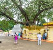 神圣的Bodhi树 免版税库存照片