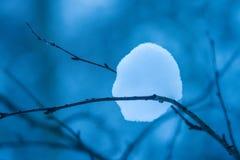 神奇冬天明亮的雪球黏附了在稀薄的分支之间 库存图片