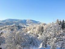 神奇冬天风景庄严山在冬天 不可思议的冬天积雪的树 在山的冬天路 在滑稽 库存照片