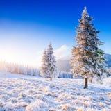 神奇冬天风景庄严山在冬天 不可思议的冬天积雪的树 在山的冬天路 免版税图库摄影