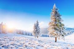 神奇冬天风景庄严山在冬天 不可思议的冬天积雪的树 在山的冬天路 免版税库存照片