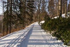 神奇冬天风景庄严山在冬天 不可思议的冬天积雪的树 在山的冬天路 Dramat 库存图片