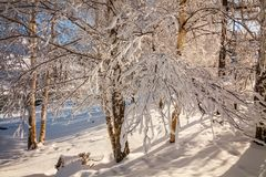 神奇冬天风景庄严山在冬天 不可思议的冬天积雪的树 免版税库存图片