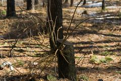 神奇和不可思议的树 库存图片