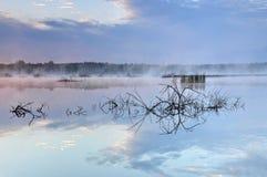 神奇和有薄雾的池塘 库存照片