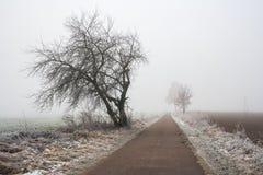 神奇有雾的冬天领域风景 免版税库存图片