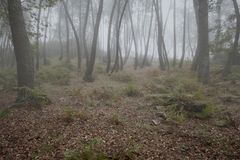 神奇有雾的森林 图库摄影