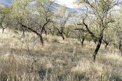 神奇森林在与树和岩石的秋天 免版税库存图片