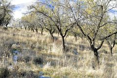 神奇森林在与树和岩石的秋天 图库摄影