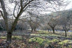 神奇森林在与树和岩石的秋天 库存照片