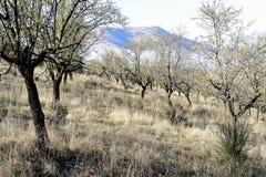 神奇森林在与树和岩石的秋天 免版税库存照片
