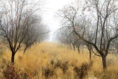 神奇森林在与树和岩石的秋天 免版税图库摄影