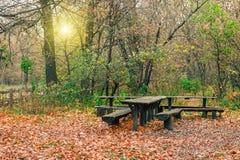 神奇森林在雨以后的晚上 表和长凳在森林美丽如画的秋天自然 免版税库存图片