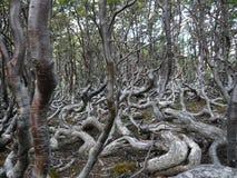 神奇森林地在世界末端 免版税图库摄影