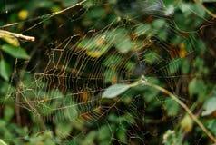 神奇森林网络蜘蛛网神仙的五颜六色的森林 图库摄影