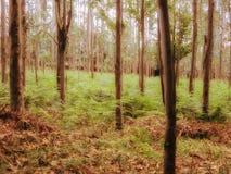 神奇森林 免版税库存图片