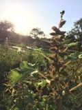 神奇植物 库存照片