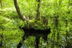 神奇池塘 免版税库存图片