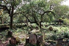 神奇的墓地 免版税库存照片