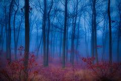 神奇的森林 免版税库存照片
