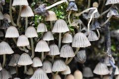神奇的蘑菇和生物的未探测的种类 免版税库存照片