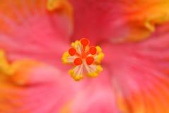 神奇的flowerscape 库存照片