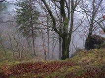 神奇秋天森林在与下落的l的11月有薄雾的雾天 免版税库存照片