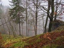 神奇秋天森林在与下落的l的11月有薄雾的雾天 图库摄影