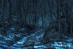 神奇道路在意想不到的树附近稀薄的分支的夜森林里  免版税库存图片