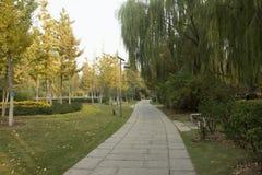 神的横向早晨公园路径 库存照片