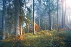 神秘的光在有雾的季节性森林里 库存照片